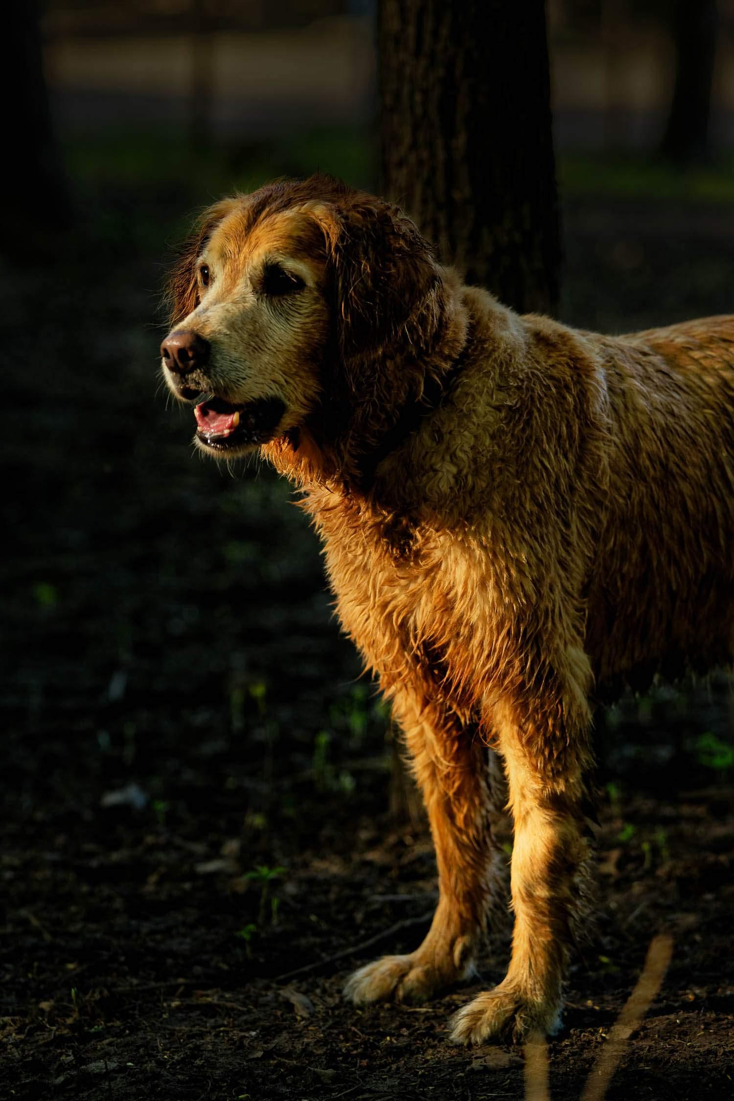 dog at dusk in the sun light