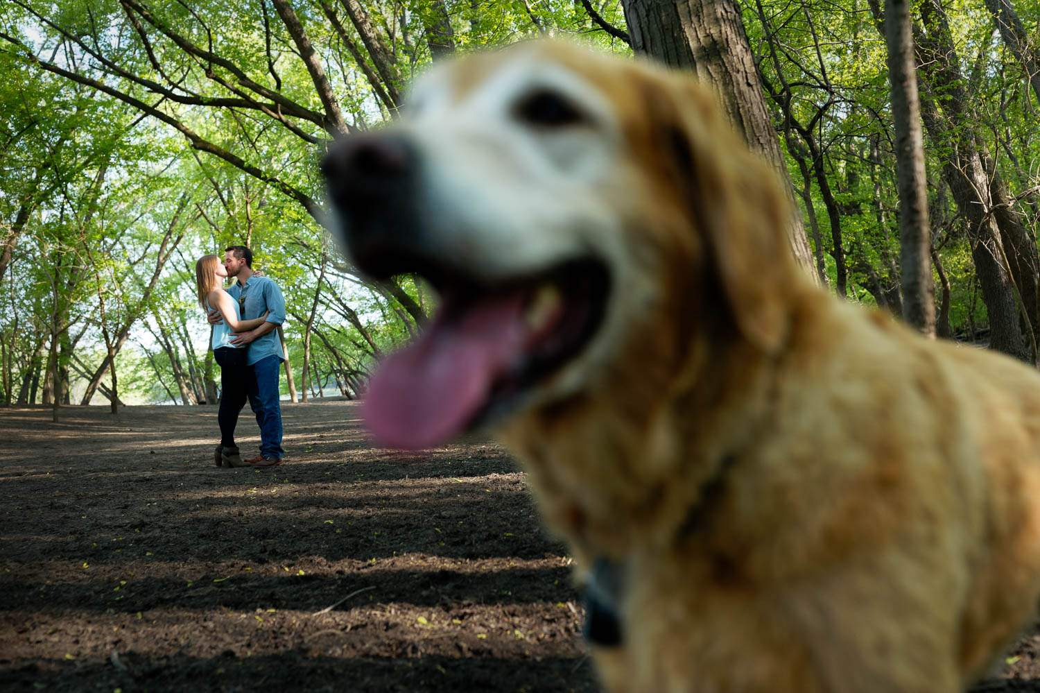 dog photo bombing engagement session in off leash dog park
