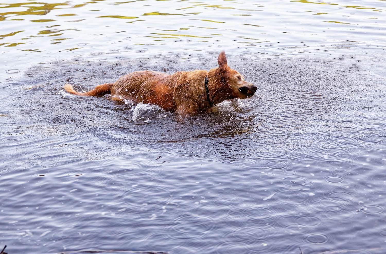 unattended situation dog enjoying this recreation aera