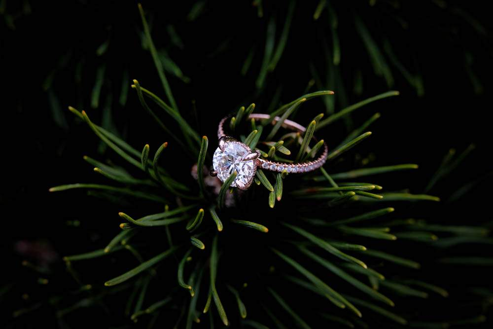 — ring in pines  —