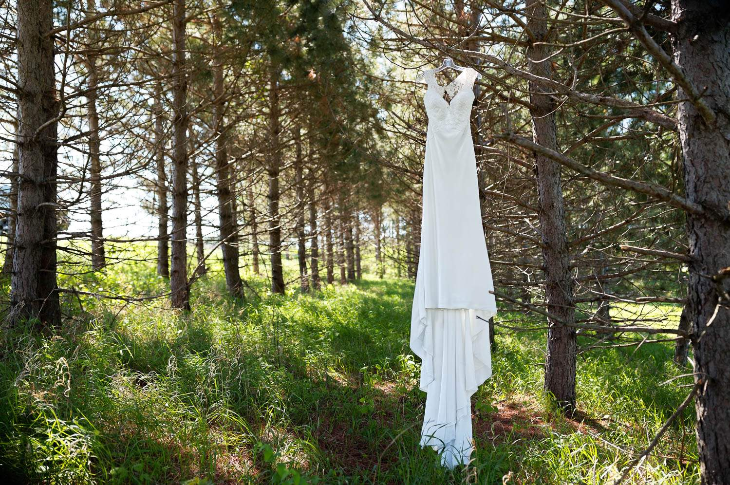 — white bride's dress in pine tree —